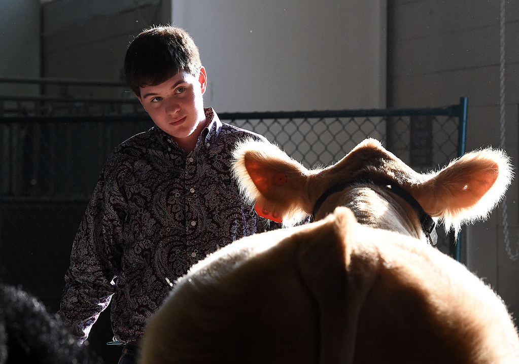 . T.J. Rice, 14, gets ready to walk his Reserve Champion market beef steer, Midas 2, into the sale ring Wednesday, Aug. 8, 2018, during the Fair Sale at the Larimer County Fair at The Ranch in Loveland.  (Photo by Jenny Sparks/Loveland Reporter-Herald)