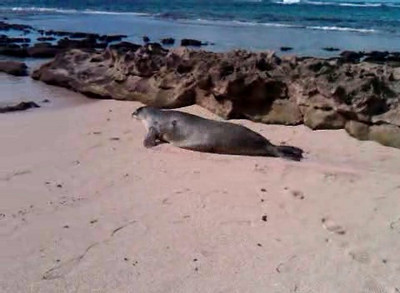 I thought this was a dead sea lion since he was lying still by himself on the beach. Nope, just snoozing until I poked him to see if he was dead.