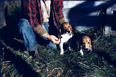 Slide 106 - Arne Larson family dogs. Queenie and Putzer