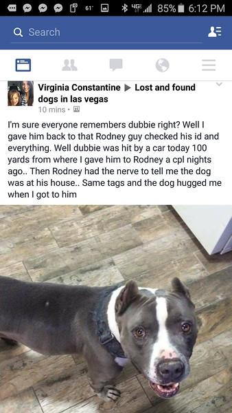 Stolen Pitbull Las Vegas Nevada