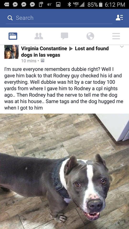 Las Vegas Found Dogs