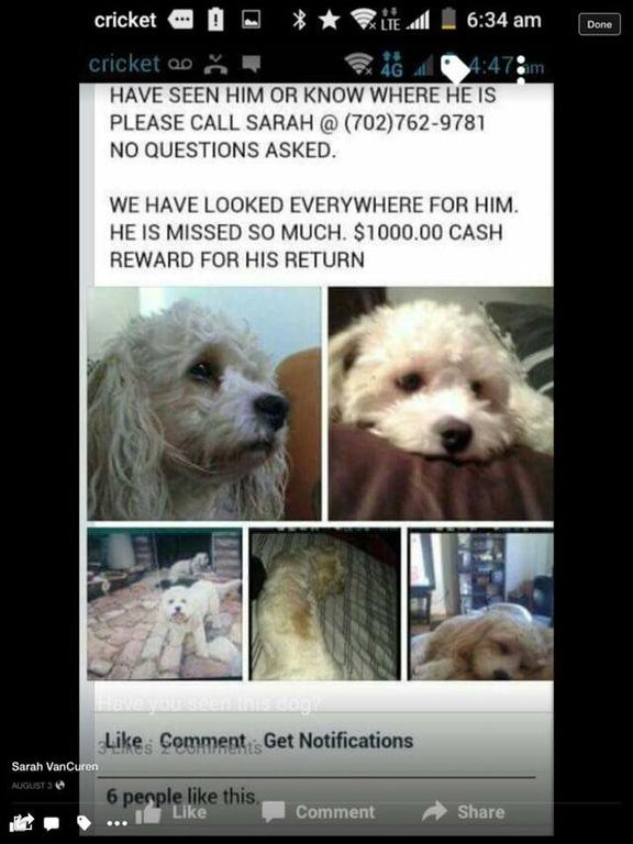 Lost Stolen white Dogs LV