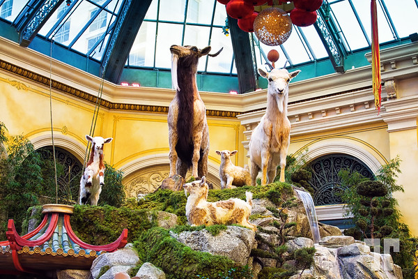 2015 Chinese New Year of the Goat Las Vegas at the Conservatory & Botanical Gardens at Bellagio
