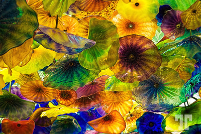 Chihuly glass artwork, Bellagio, Las Vegas