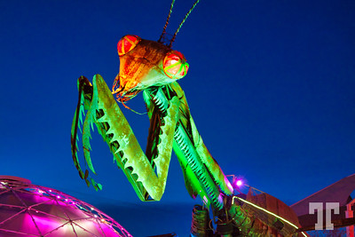 Praying-Mantis-VEGAS-LUM