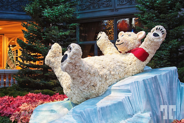 Winter theme at Bellagio Gardens