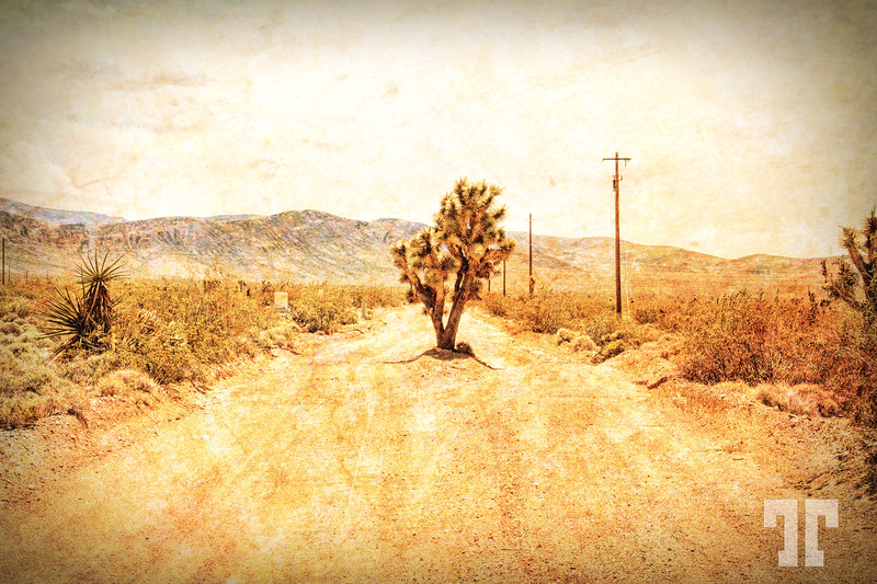 joshua-tree-country-road-arizona-texture2