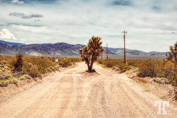 joshua-tree-country-road-arizona-Aurora