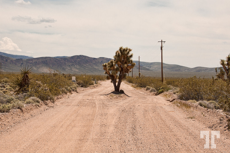joshua-tree-country-road-arizona