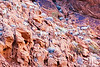 desert-bighorn-sheep-valley-of-fire-nevada-1