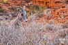 desert-bighorn-sheep-valley-of-fire-vegas-nevada-6