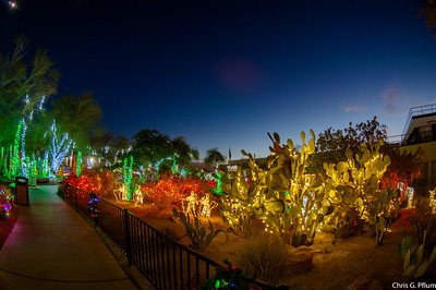 Cactus Gardens at the Ethel M Chocolate Factory