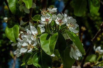 Las Vegas Spring Preserve - Botanical Gardens