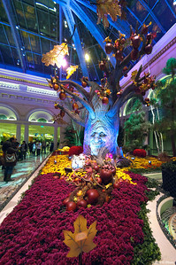 Bellagio Conservatory - Theme for Fall 2011