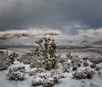 I drove to Red Rock Canyon this morning to photograph a rare desert snowfall.   The sky was overcast, but sunlight occasionally broke through the clouds.