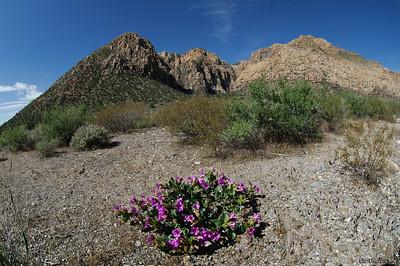 Ice Box Canyon, Red Rock Canyon , Las Vegas, Nevada