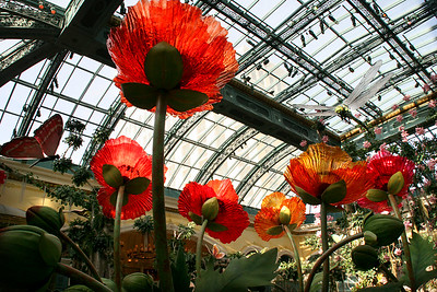 Bellagio Conservatory Spring design soon to be changed to Red, White and Blue theme