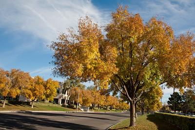 Autumn Street View