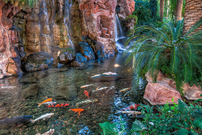 flamingo-koi-pond-3