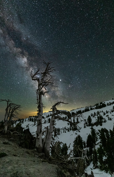 Spooky Trees, Snow and Summer Milky Way