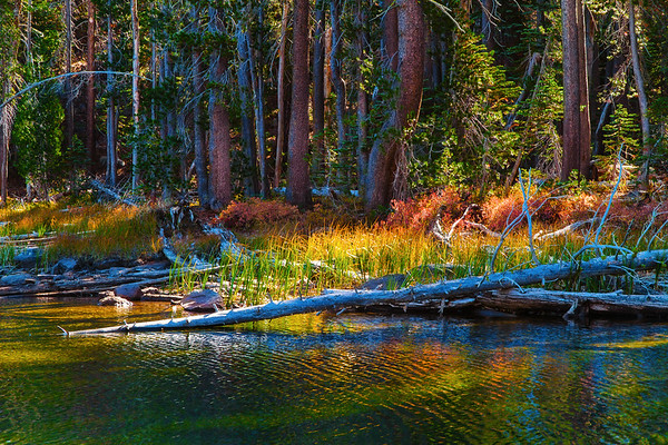 Caribou Autumn