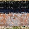 Old Saline Cemetery, Saline, Louisiana 081415 050 Frey