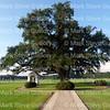 St Leo IV Cemetery, Robert's Cove, Louisiana 080415 112