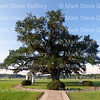 St Leo IV Cemetery, Robert's Cove, Louisiana 080415 113