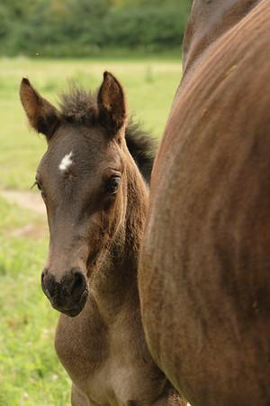 Kenton & Rebecca's Horses: July 10, 2007