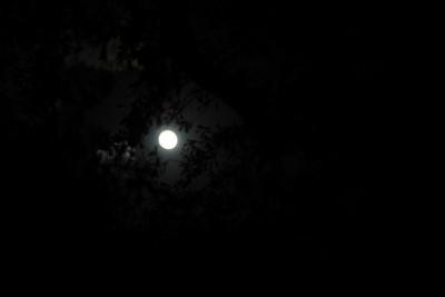 Moon: Nov. 11, 2008