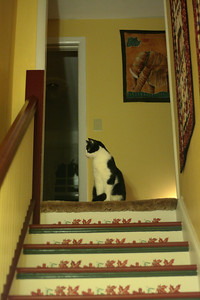 Oct. 22, 2009: Raoul was sitting at the top of the stairs when we came home from playing laser tag. It was like he was waiting for us. Naturally, when I held up the camera he looked away.