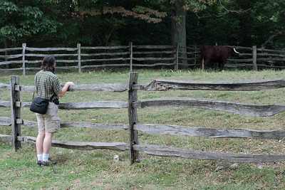 Oct. 2, 2009: Patrick looks at the oxen.
