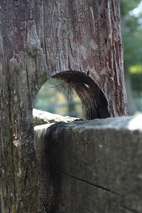 Oct. 1, 2009: A spider on the stile at the Crater.