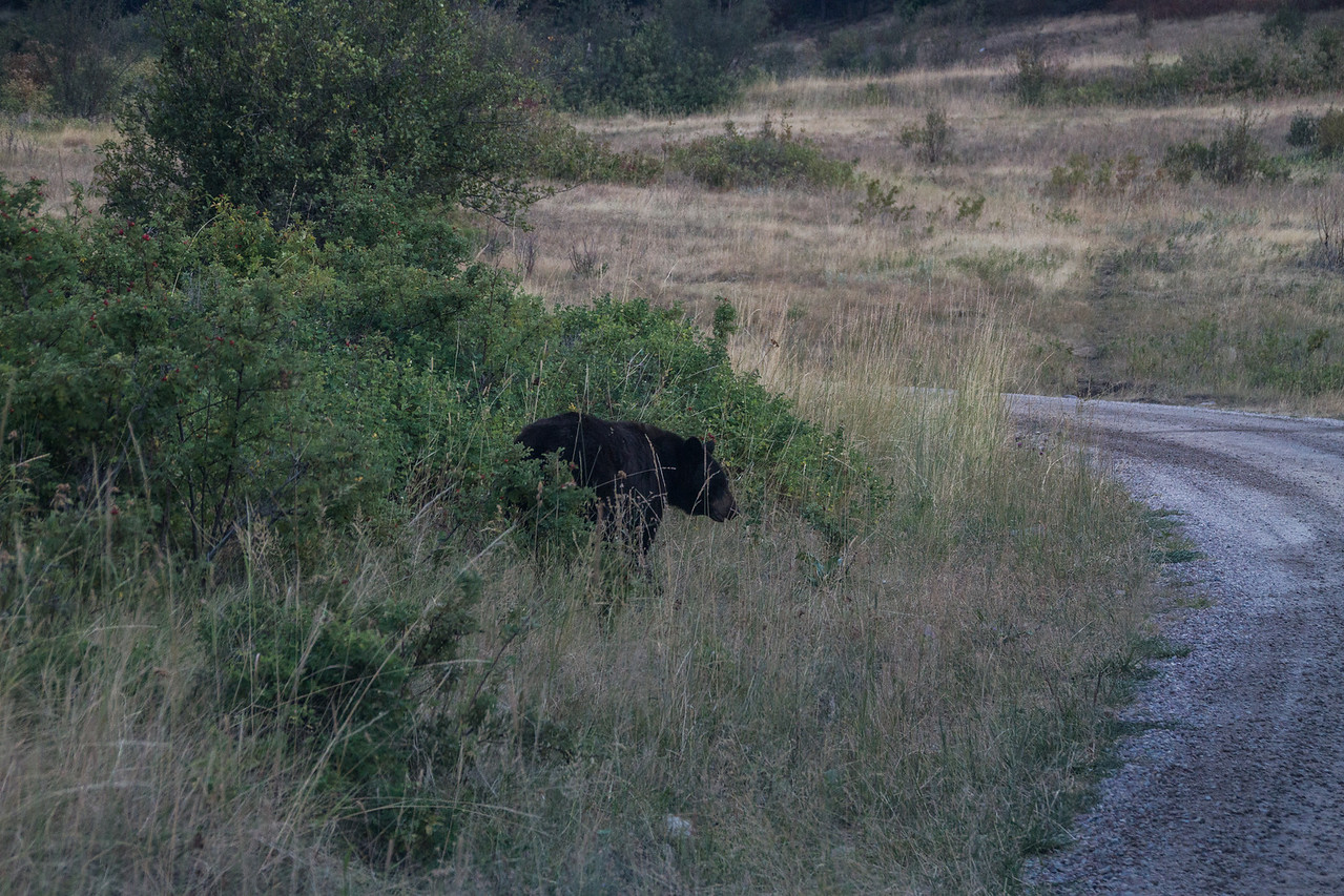 Black bear from Tuesday Night