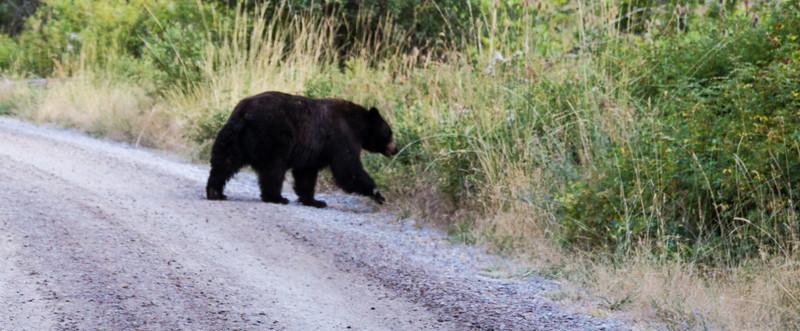 Black bear from Tuesday Night