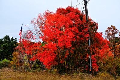Late Fall Colors Along Bull Creek