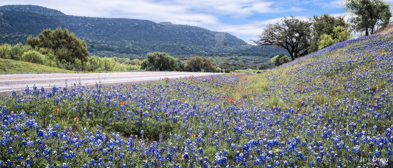 Packsaddle Bluebonnets 2018 Pano