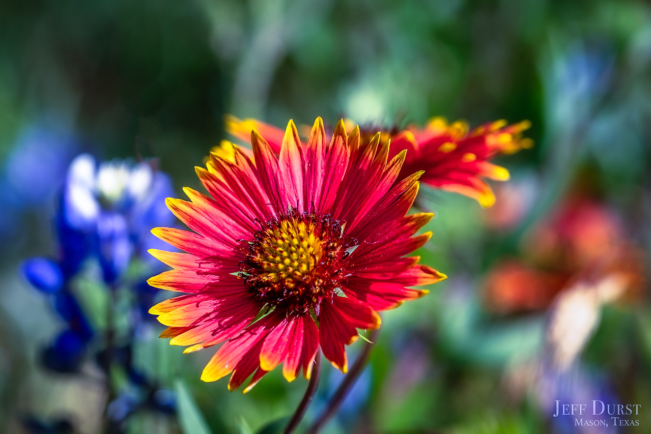 Dazzling Indian Blanket