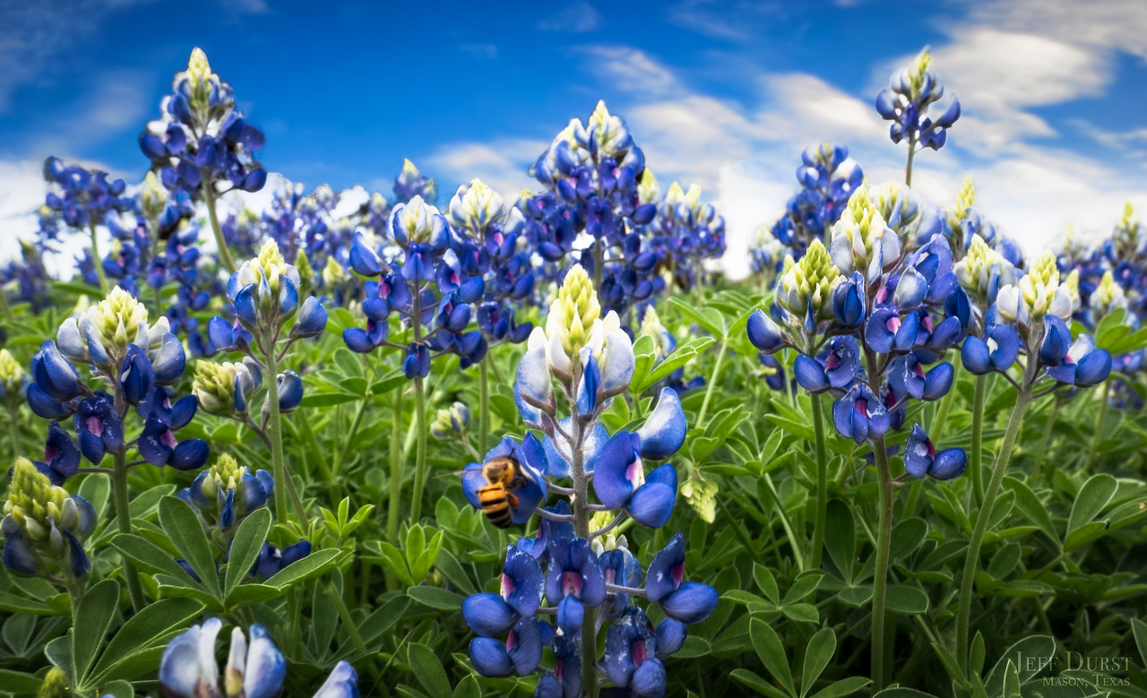 Bluebonnets 2018 Mar Clinic Bee