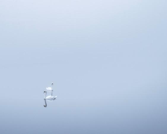 Swans Coniston Lake, Fog