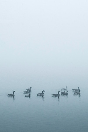 Geese on Conistone lake in fog