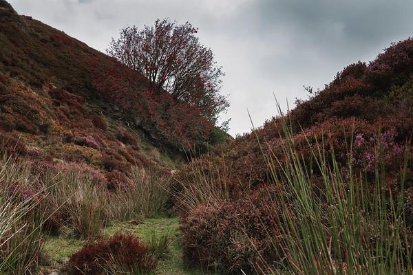 Hidden Garden Crossleyside