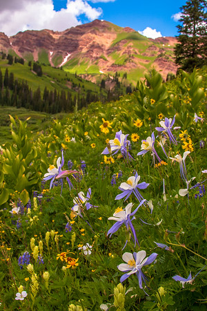 Nature's Palette, Crested Butte, CO