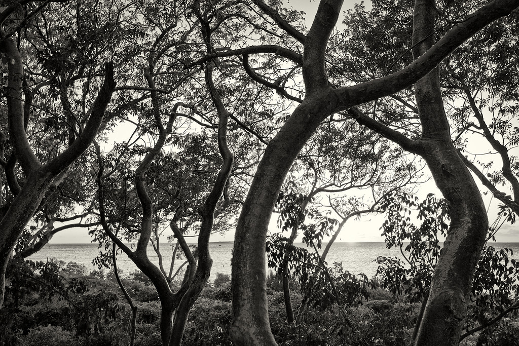 Through the Trees in the Keys I