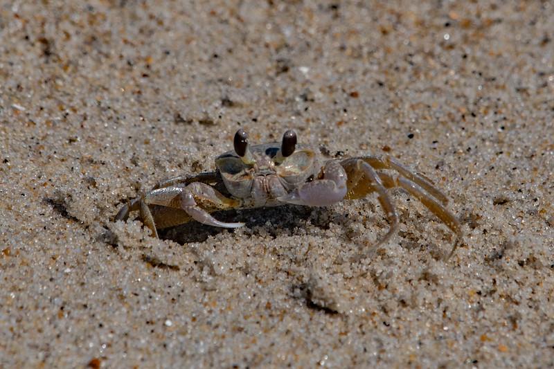 Crabby Pattie