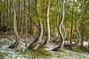 Bent Between Seasons Landscape
