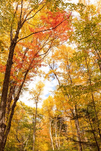 New Hampshire Gold 3