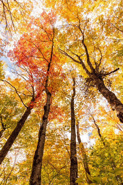 New Hampshire Gold 4