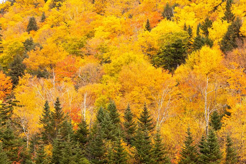 New Hampshire Gold 2