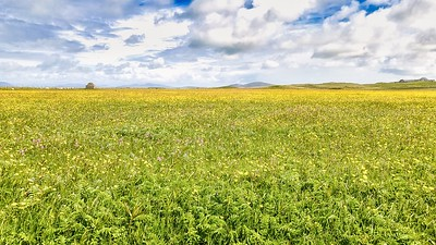 Dunskellor field